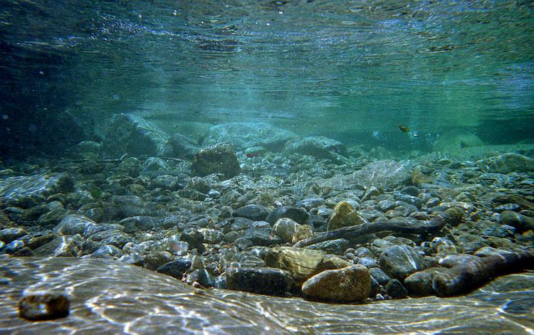 basinwater